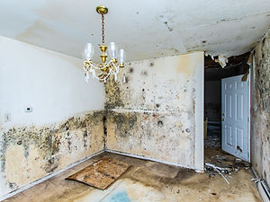 Water damage causing mold growth on the interior walls of a property.jpg