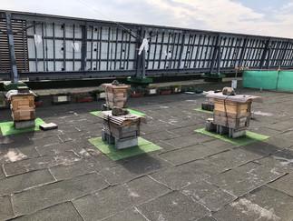 富谷市役所屋上の養蜂場
