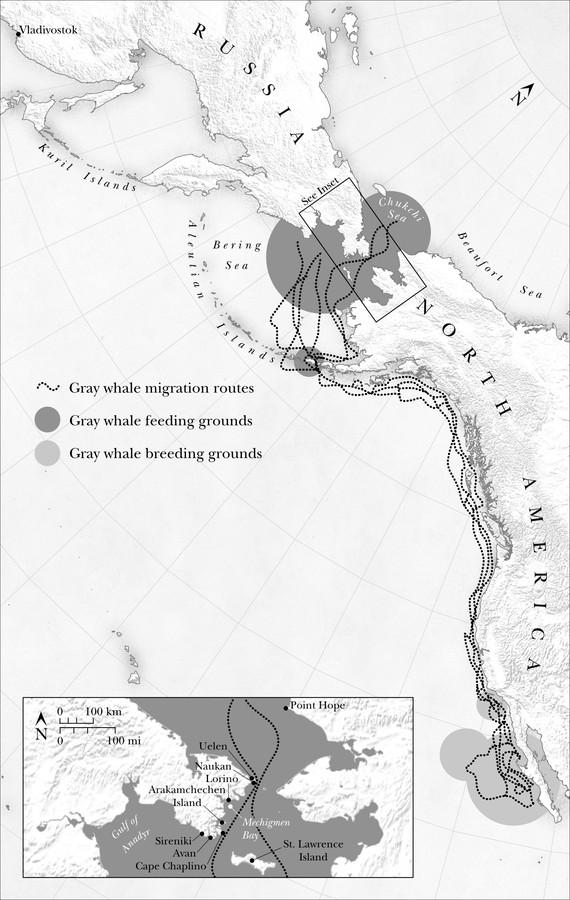 Gray Whale Migration Routes