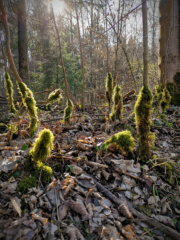 """""""Waldwesen"""" 2017"""