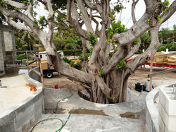 Cast in Place Raduis Front Stairs around Existing Tree
