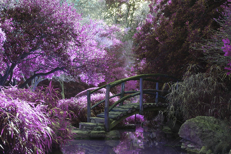 Purple bridge.jpg