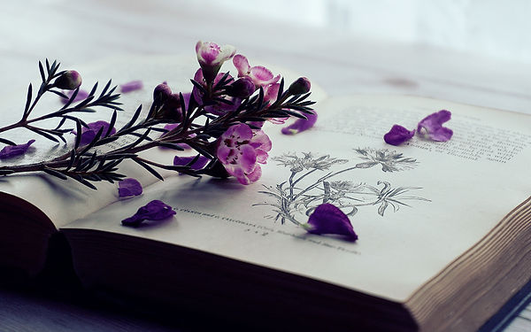4k-wallpaper-beautiful-bloom-1480347.jpg