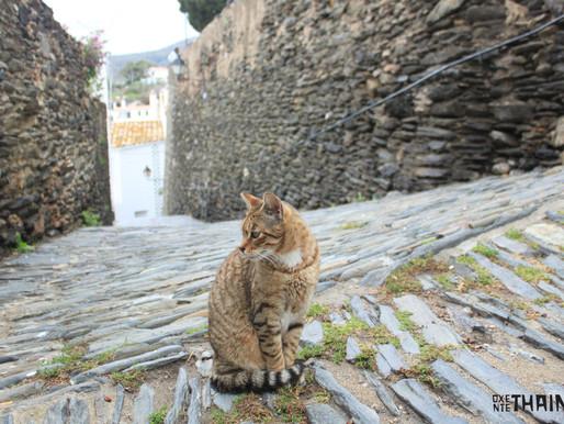 #instafolhetim 2: O gato que vicia