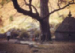 IMG_1667_edited.jpg