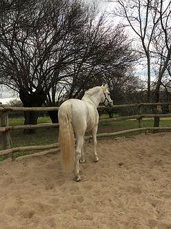 Feldenkrais con caballos Madrid - Aimará Moreno Osío