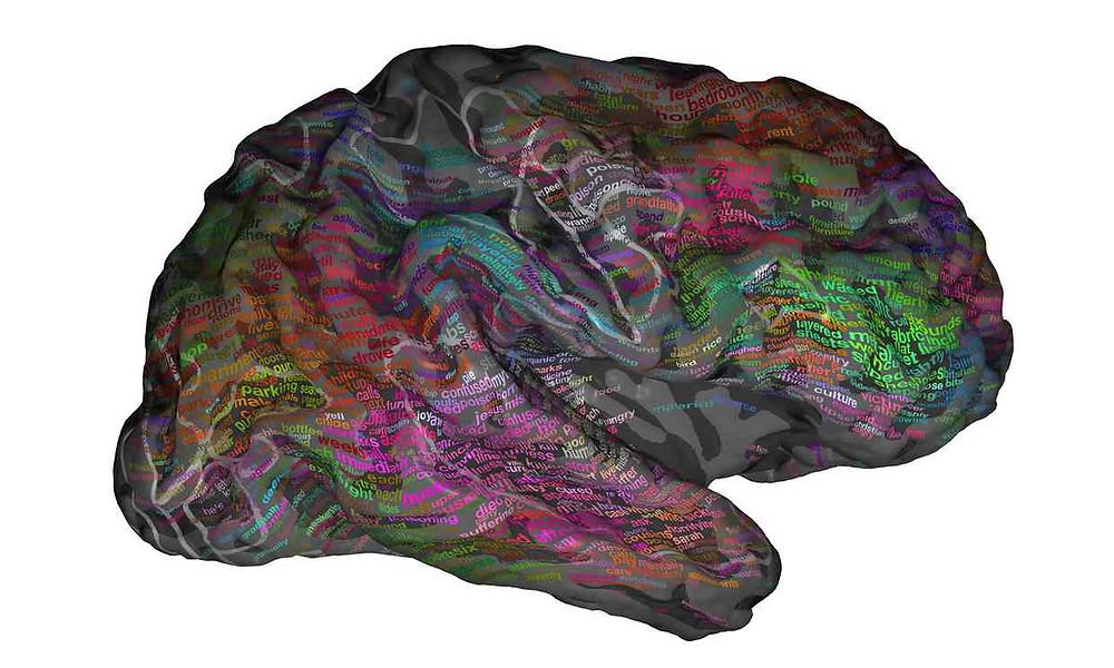 Representación en el cerebro de cómo se organizan las palabras. Ilustración: Copyright Alexander Huth / The Regents of the University of California