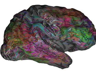 """Neurocientíficos crean un """"atlas"""" que representa cómo se organizan las palabras en el cere"""