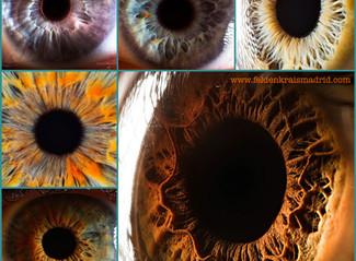 Los ojos, el cerebro y el método Feldenkrais