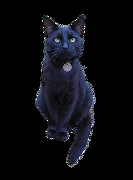 Rayne Hall - Sulu my cat