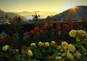 Růžová zahrada.jpg