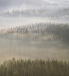 germany saxony fog early morning_.jpg
