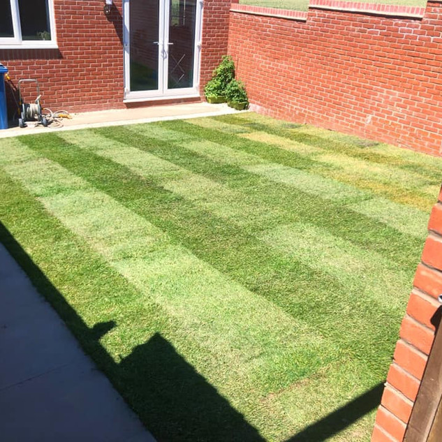 lawn turf 5.jpg