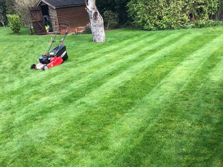 lawn pic2.jpg