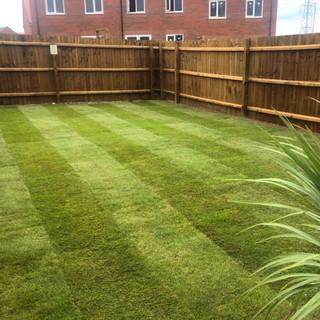 lawn turf.jpg