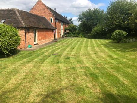 lawn turf 8.jpg