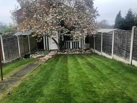new lawns.jpeg
