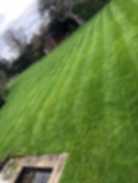 lawnpic.jpeg