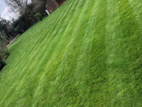 lawnpic.jpeg