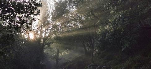 Morgenlicht Kreta