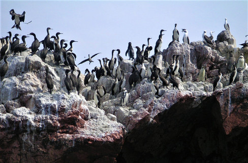 Islas Ballestas Peru