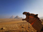 Kamel und Pyramiden