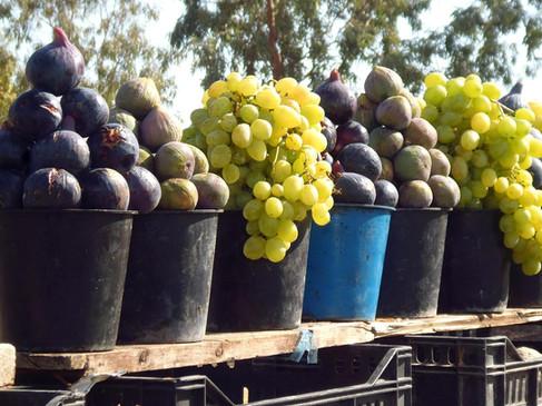 Früchte Tunesien