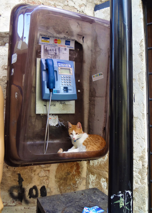 Katze Türkei