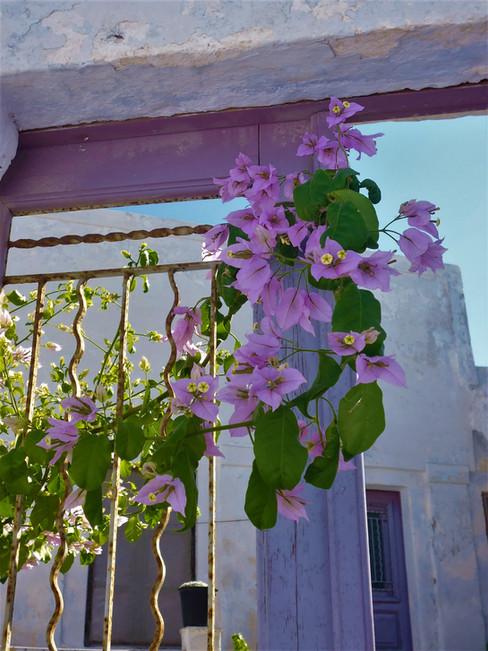 Blumen Santorini