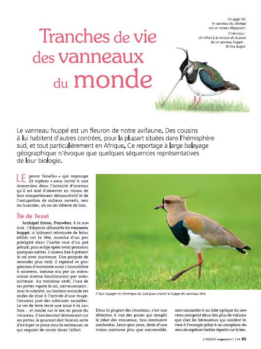 Oiseau Magazine n°118