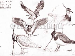 De retour à l'ornithologie !