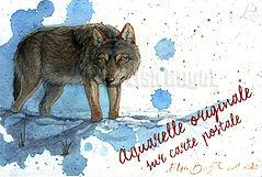 CPLoupGris_ElsaBugot2020.jpg