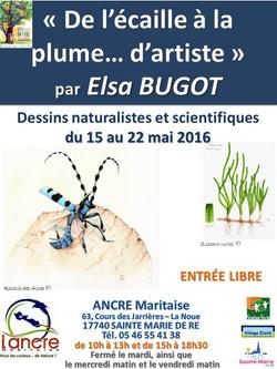 Expo dessins Elsa BUGOT 15 au 22 mai 2016 def