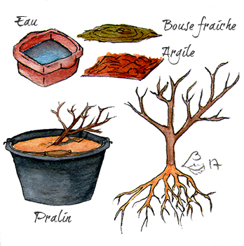 Préparation du pralin (plantatiion)