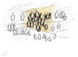 Rhinolophe euryale - colonie
