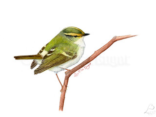 Un bref retour à l'ornithologie
