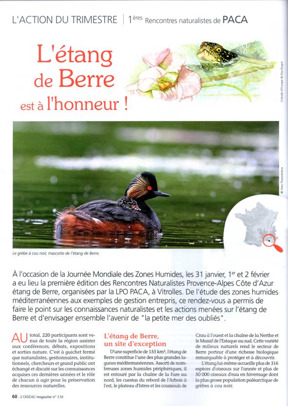 Oiseau Magazine n°116