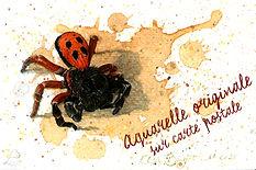 CPErèse_Coccinelle_ElsaBugot2020.jpg