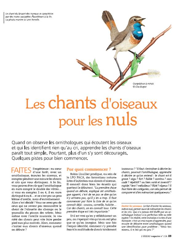 Oiseau Magazine n°119
