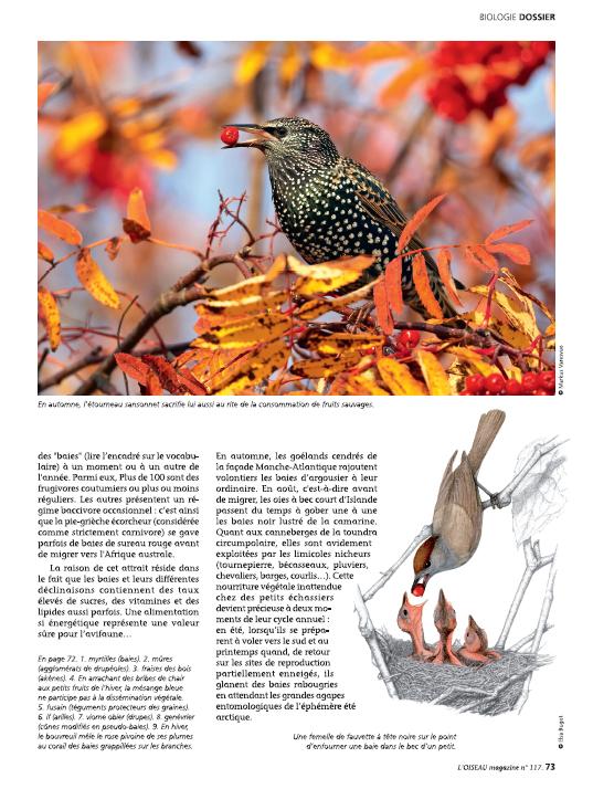 Oiseau Magazine n°117