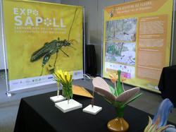 Exposition SAPOLL