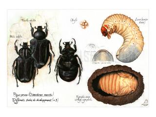Un insecte odorant