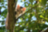 adorable-animal-cat-257532.jpg