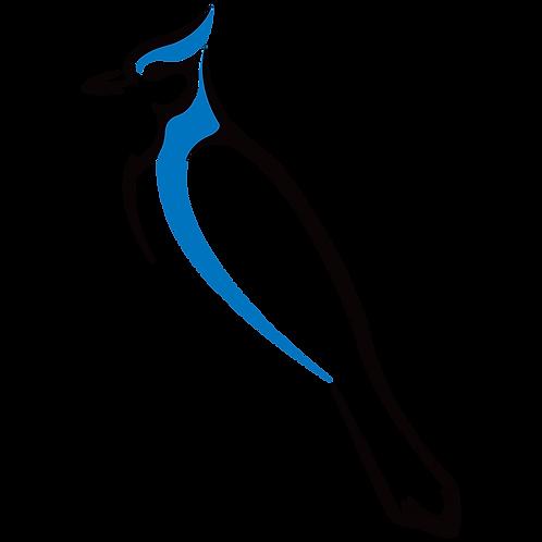 Digital Bird Series – Blue Jay
