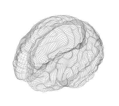 Wireframe-of-brain-with-occipital-region