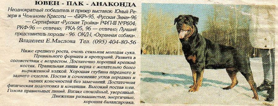 Ювен Пак Анаконда