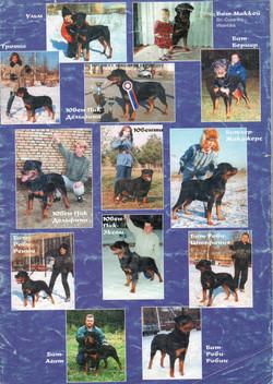 Наши собаки /1998 год/
