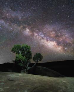 bush-tree stars haha