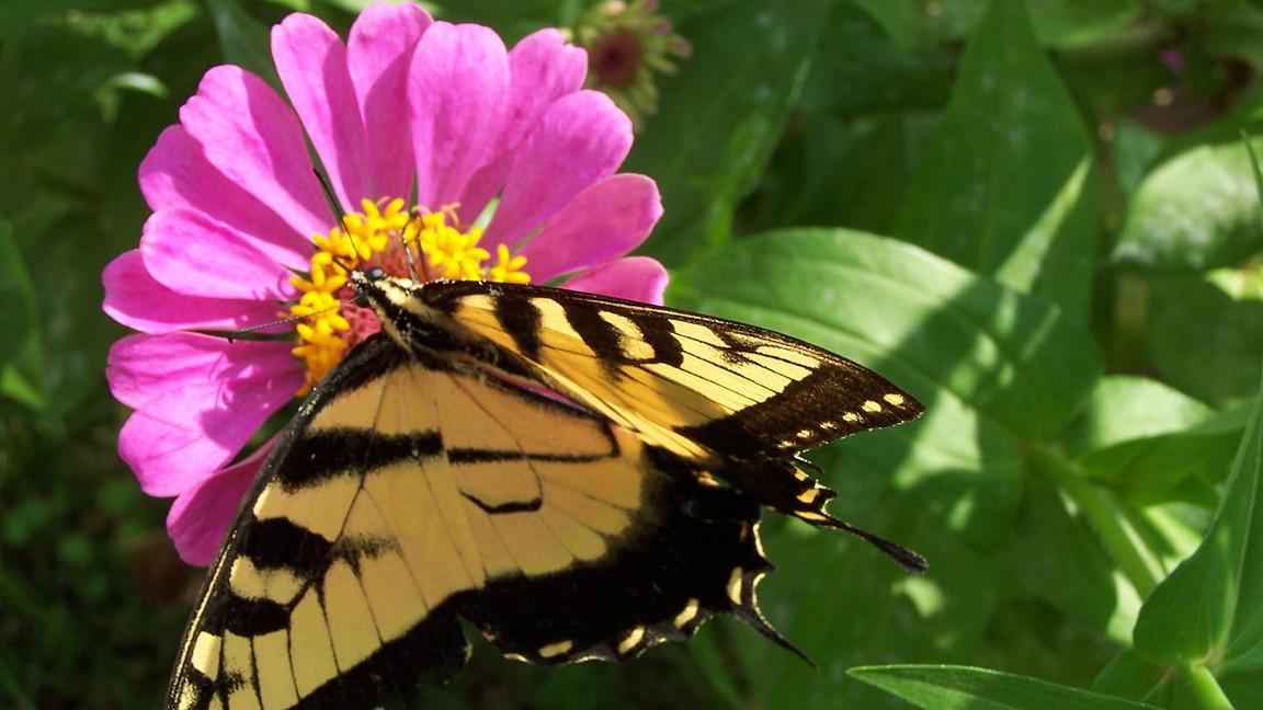 butterfly 007.jpg