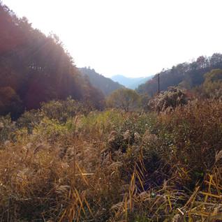 17.11.03 홍천 수타사 트래킹